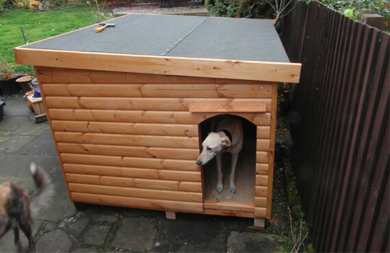 shed type dog kennel